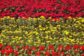Magnificent bright multi-colour flower bed in the park — Stock Photo