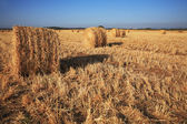 Rick gathered wheat in the sun — Stock Photo