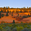 State Park Coral Pink Dunes at sunset — Stockfoto