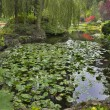 Lilies in a pond. — Stock Photo #10993706