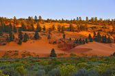 State Park Coral Pink Dunes at sunset — Stock Photo