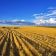 Stock Photo: Solar autumn midday after harvesting
