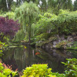 Pond in garden. — Stock Photo #11078429