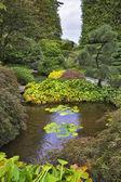 Shallow charming pond. — Stock Photo