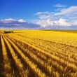 The midday on fields of Montana - Stock Photo