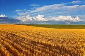 Solar autumn midday on fields of Montana — Stock Photo