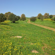 Stok fotoğraf: Rural footpath crosses meadow