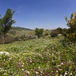 Vicinities of mountain Meron in spring day — Stockfoto #11557403