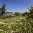 Stockfoto: Vicinities of mountain Meron in spring day