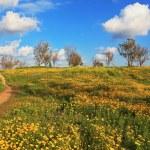 Desert in flowering — Stock Photo