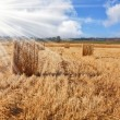 The field after wheat harvesting - ストック写真