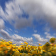 The clouds flying above yellow buttercups - ストック写真