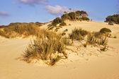 Cespugli sulla sabbia — Foto Stock