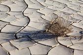 A small dry bush — Photo