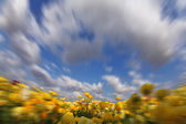 The clouds flying above yellow buttercups — Stock Photo