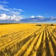 Midday on fields of Montana — Stock Photo #12053146