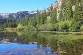 Yumuşak su yüzeyi iğne yapraklı ormanlar yansıtır — Stok fotoğraf