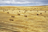 Huge field and stacks — Stock Photo