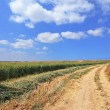 Rural dirt road between green fields — Stock Photo #12315253