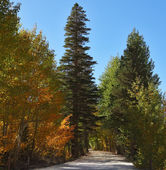 Toprak yol mountain Park — Stok fotoğraf