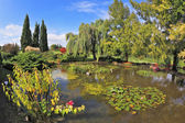 The pond surrounded by a colored shrubs — Stock Photo