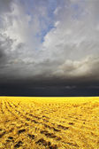 The storm in a countryside begins — Stock Photo