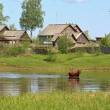 Stock Photo: Cows on river coast near villages