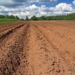 Plow field — Stock Photo