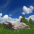 Sawn up tree - Stock Photo