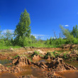 Foto Stock: Old sandy quarry in green wood