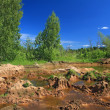 Стоковое фото: Old sandy quarry in green wood