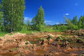 Old sandy quarry in green wood — Stock Photo