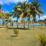 Coconut palms on the Atlantic coast — Stock Photo