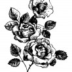 Roses. Hand-drawn illustration — Stock Vector