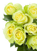 Green roses bouquet — Stock Photo