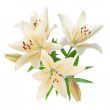 White lily bouquet — Stock Photo #11463524