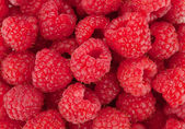 Raspberry closeup — Stock Photo