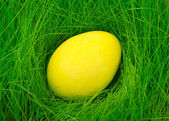 Yellow painted Easter egg in the grass — Stock Photo