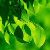 Fogliame verde al sole del mattino travi — Foto Stock