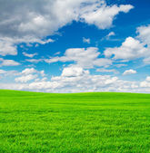 Green field and blue sky background — Stock Photo