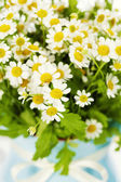 Flowers in a vase — Stock Photo