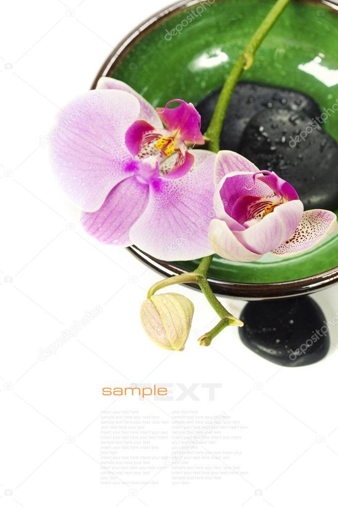composition orchid e spa photographie klenova 11463573. Black Bedroom Furniture Sets. Home Design Ideas