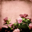 Pink roses — Stock Photo #12028010