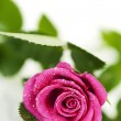 Pink rose — Stock Photo #12309760