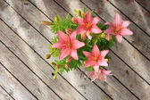 Asiatic lily — Stock Photo