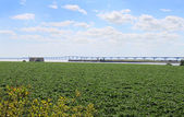 Potato field and bridge — Stock Photo