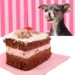 Dog staring at cherry chocolate cake — Stock Photo #12108846