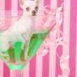Chihuahua inside party glass — Stock Photo