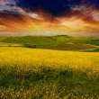 Stock Photo: Landscape and Meadows of Tuscany, Spring Season