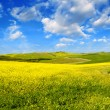 Countryside Landscape with Fields and Meadows — Stock Photo